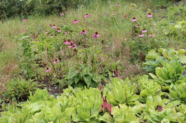 Les jardins de la Posterie à Courcelles