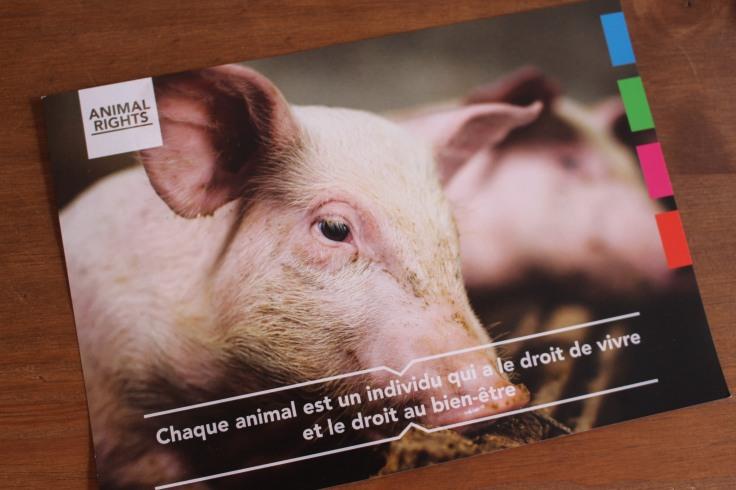 Marché vegan de Chapelle lez Herlaimont - 17 septembre 2017 (75)